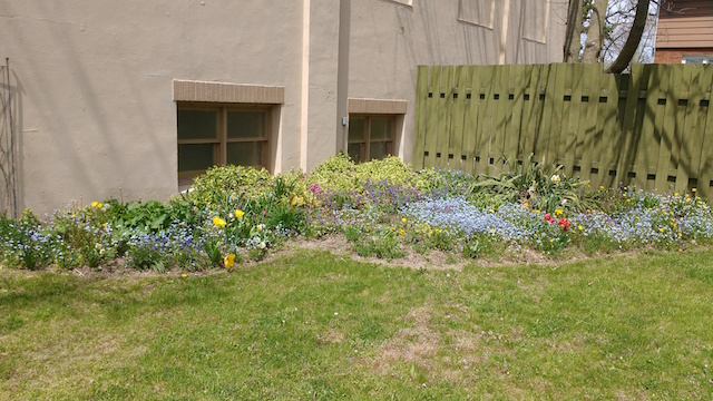 Look at how our spring flowers are coming along - finally! Happy Mother's Day!